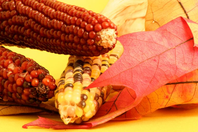 Teaching kids the Legend of the Five Kernels - from Thanksgiving.com