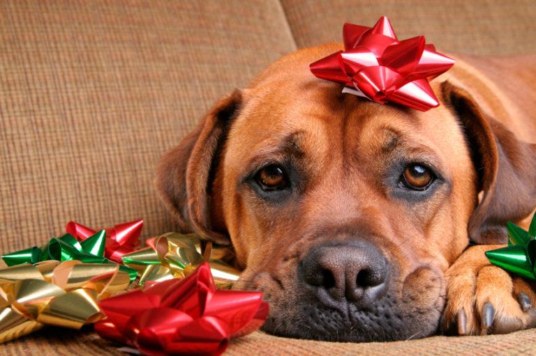 dog with christmas bows