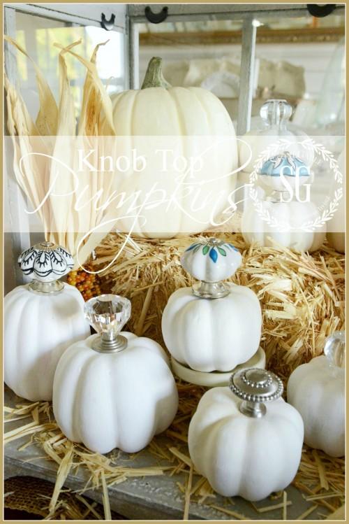 no-carve knob top pumpkins