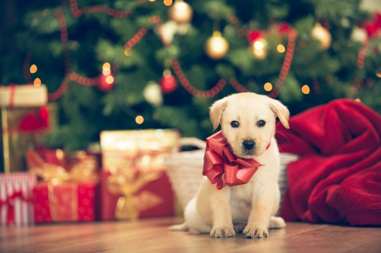 Getting your kid a pet for Christmas