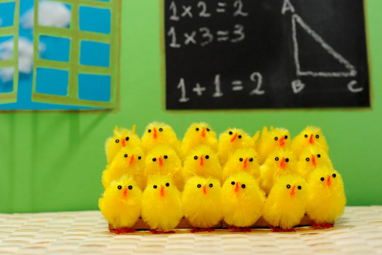 Chicks in Classroom