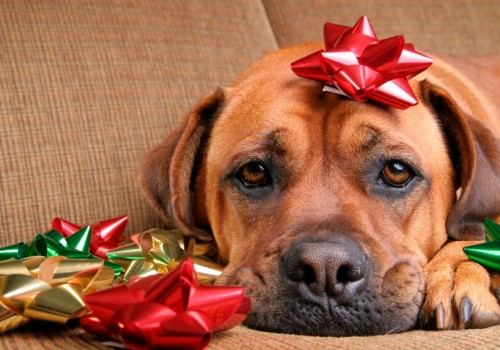 Hidden holiday dangers to your pets: Seasonal decor, houseguests, food & more